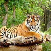 Sundarban Tiger Reserve Package