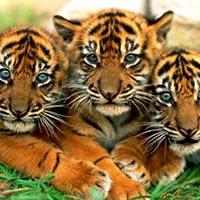 Sundarban Hilsa Festival Kolkata Tour