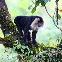 Sundarban Wildlife Package Tour