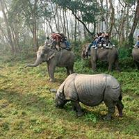 Kathmandu And Wildlife Package