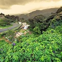 Kerala Hills Stations & Backwater Tour
