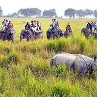 Assam Wildlife Tour Package