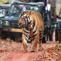 Golden Triangle trip with Ranthambore