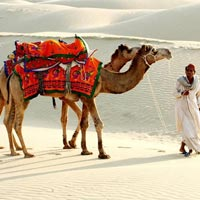 2 Days Camel Safari Tour