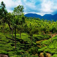 Exotic Kerala (Standard Package) Tour