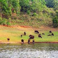 Kerala 4N 5D Tour