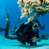 Andaman Sightseeing Programme for 09 Nights / 10 Days Tour