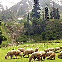 Explore Kashmir Package
