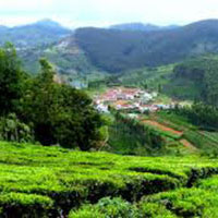 Ooty Honeymoon Special Package