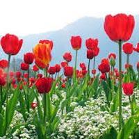 Jannate Kashmir Tour