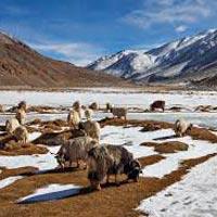 Journey to Ladakh Tour