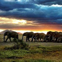 2 days Amboseli Safari from Nairobi Tour