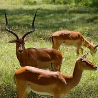 1 Night Ark / 1 Night Nakuru /1 Night Mara Tour