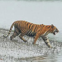 Sajnakhali Wildlife Sanctuary Tour