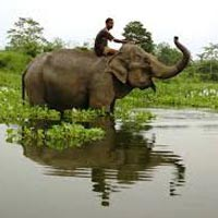 Nameri - Kaziranga Bird Watching break Tour
