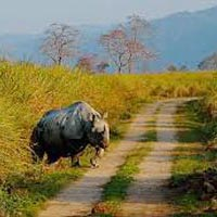 Kaziranga and Guwahati 4 days Tour