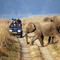 Corbett Nights Package 3 Days / 2 Nights