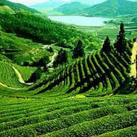 Ooty - Coonoor Break