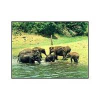 07Nts / 08 Cochin - Munnar - Thekkady - Alleppey - Kumarakom - Kovalam Tour