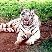 Orissa Wildlife Tour