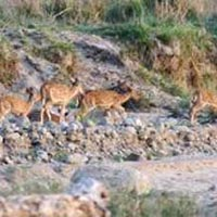 Chandigarh Rajaji National Park weekend Tour