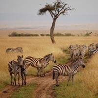 7 days kenya holiday safari Tour