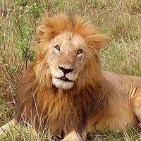 3 Days Masai Mara Safari Tour