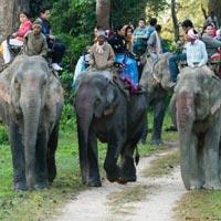 Namdapha National Park Tour