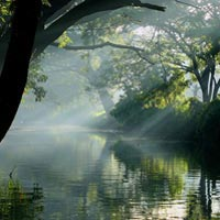 Stunning Backwaters of Kerala