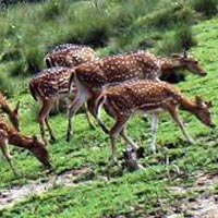 Bhitarkanika National Park Tour