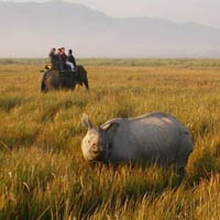 Kaziranga 2 star Weekend Package for 3 days