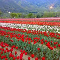 Ex-Srinagar - 07 Days|06 Nights Tour