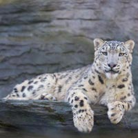 13Day/12 Nights Snow Leopard Trek