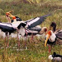 Bharatpur birdwatching Tour