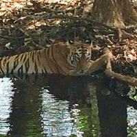 Tadoba Tigare Nation Tour Package
