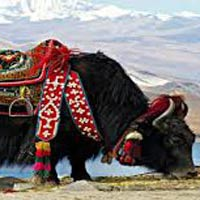 Himachal Delights Package
