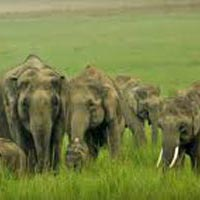 Corbett 2Nights & 3Days Tour