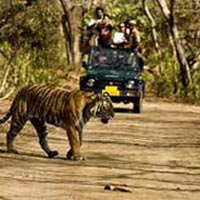 Jim Corbett Tour