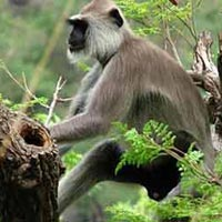 North India Wildlife Tour