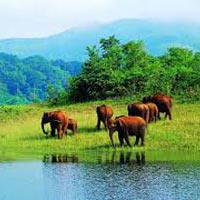 Munnar Athirapally Honeymoon Package