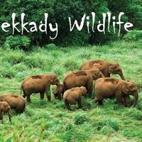 Thekkady Wildlife Tour