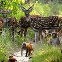 Corbett Tour Package