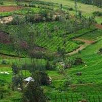 Mysore - Kabini - Coorg Tour