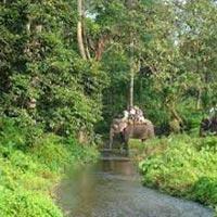 Jaldapara National Park : 2 Nights / 3 Days (Jungle Exclusive)