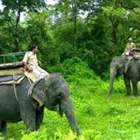 Jaldapara & Gorumara Wildlife Tour