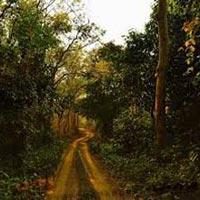 Garumara National Park – Jaldapara National Park – Chilapata- Buxa Tiger Reserve Tour Package :