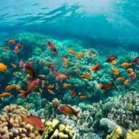 Paradise on Coral Reef Tour