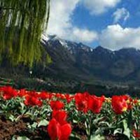 Splendors Of Kashmir Package