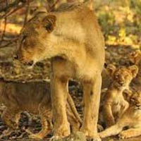 Short Escape to Gir Tour