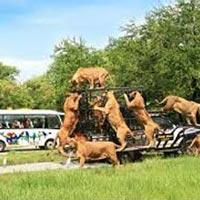 Pattaya Honeymoon Tour